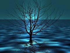 Ocean tree is sign of survival.